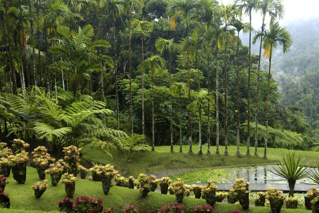 Balata Garden - Martinique
