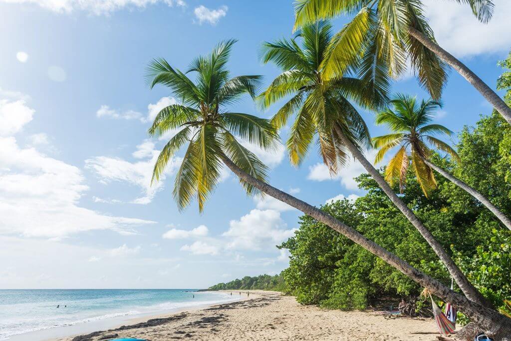 Grande Anse des Salines Beach - Martinique