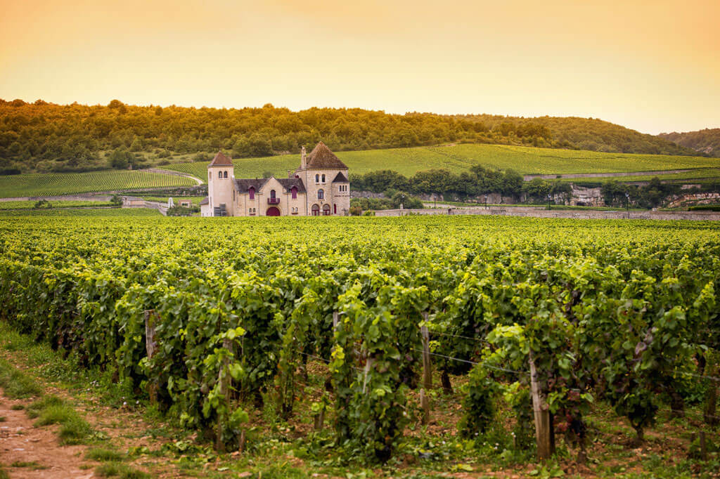 Burgundy Wine Region, France
