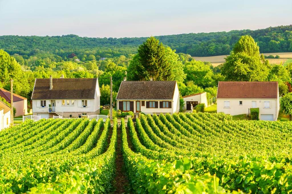 Champagne Vineyards, France