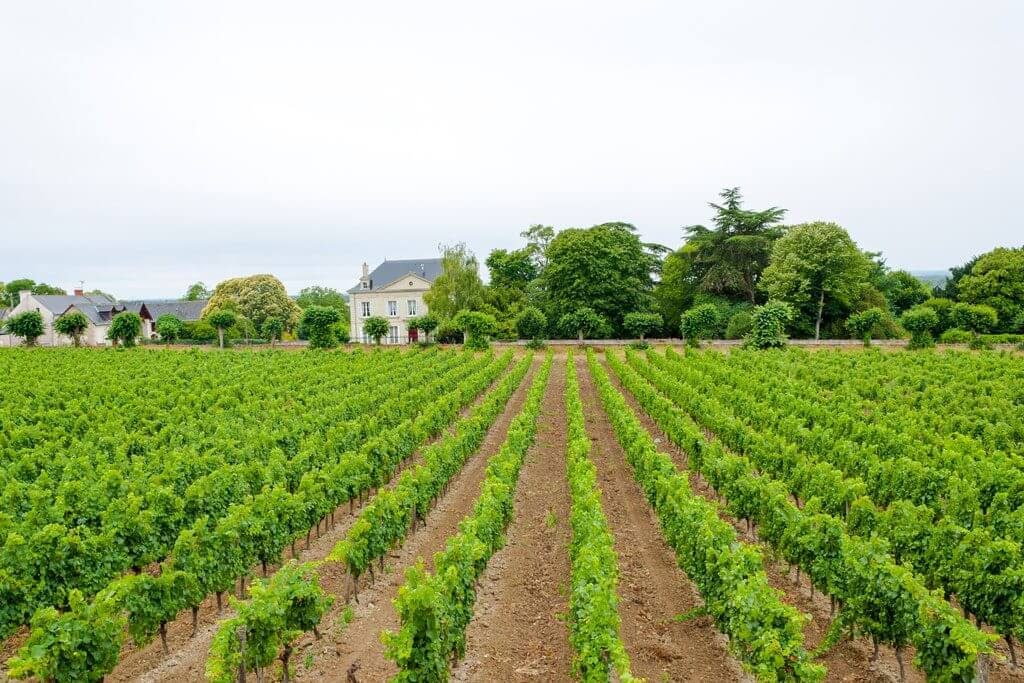 Wine of Loire Valley