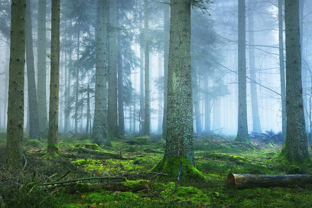 The Vosges - Alsace