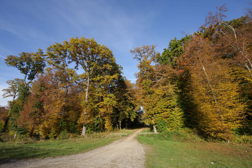 Forest of Compiegne - France