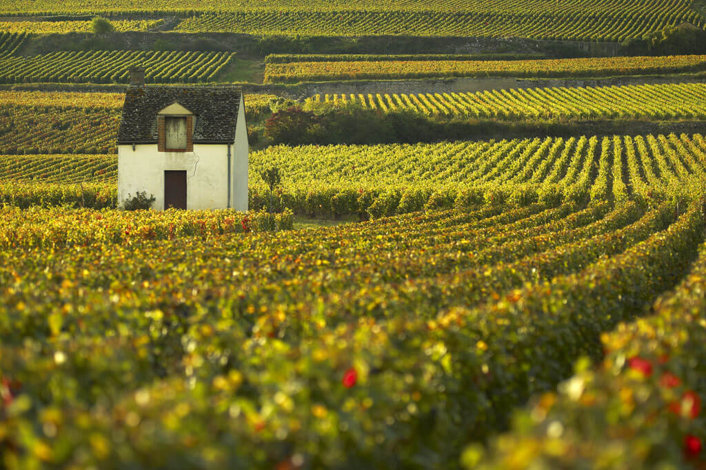 Vineyards of Burgundy - Beaune