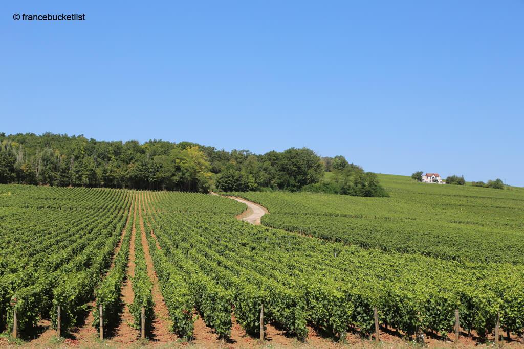 Côte-de-Nuits Vineyards